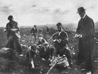 Agrarregionen in NÖ im Ersten Weltkrieg