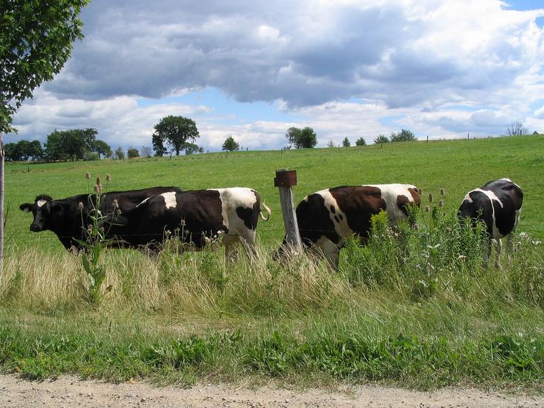 Agrarian Studies Group - Sommersemester 2018/3