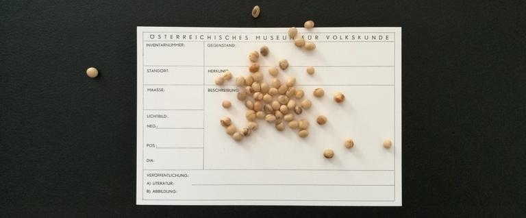 Die Sojabohne im Volkskundemuseum Wien und darüber hinaus. (c) Volkskundemuseum Wien